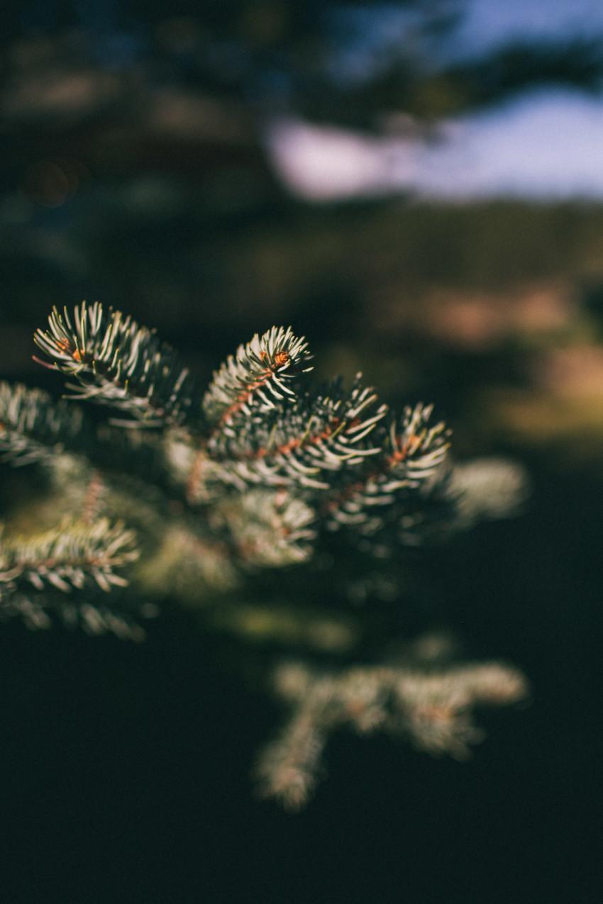 031 Evergreen Lake House Wedding Photographer pine