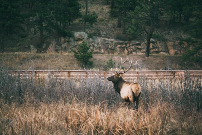 056 Evergreen Lake House Wedding Photographer elk