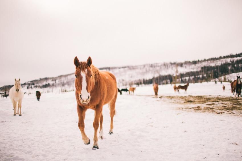 Kori Dan Engagement Steamboat Springs Vista Verde Ranch Horses Barn Snow Winter-001
