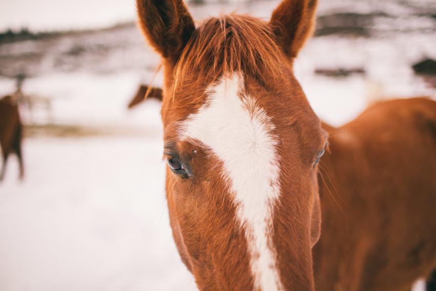 Kori Dan Engagement Steamboat Springs Vista Verde Ranch Horses Barn Snow Winter-003