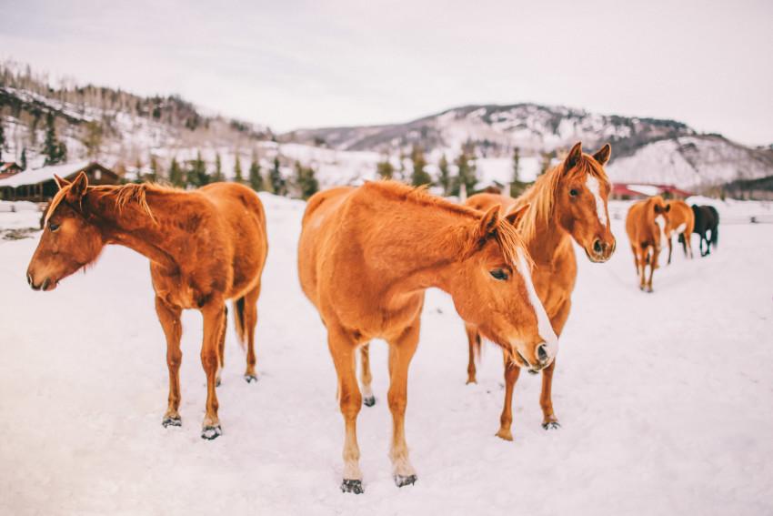 Kori Dan Engagement Steamboat Springs Vista Verde Ranch Horses Barn Snow Winter-005